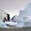 1370 - Detaille Island - 2011-02-21 - P1070126