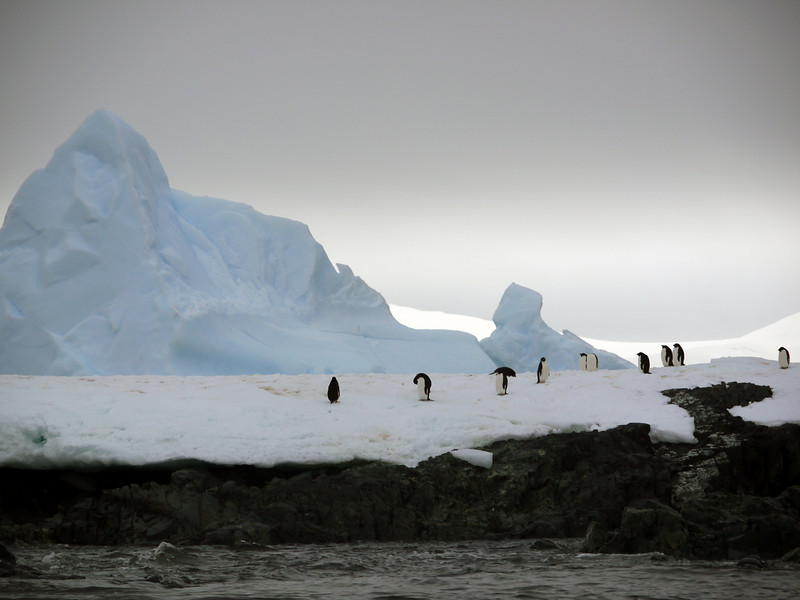 1318 - Detaille Island - 2011-02-21 - P1070033