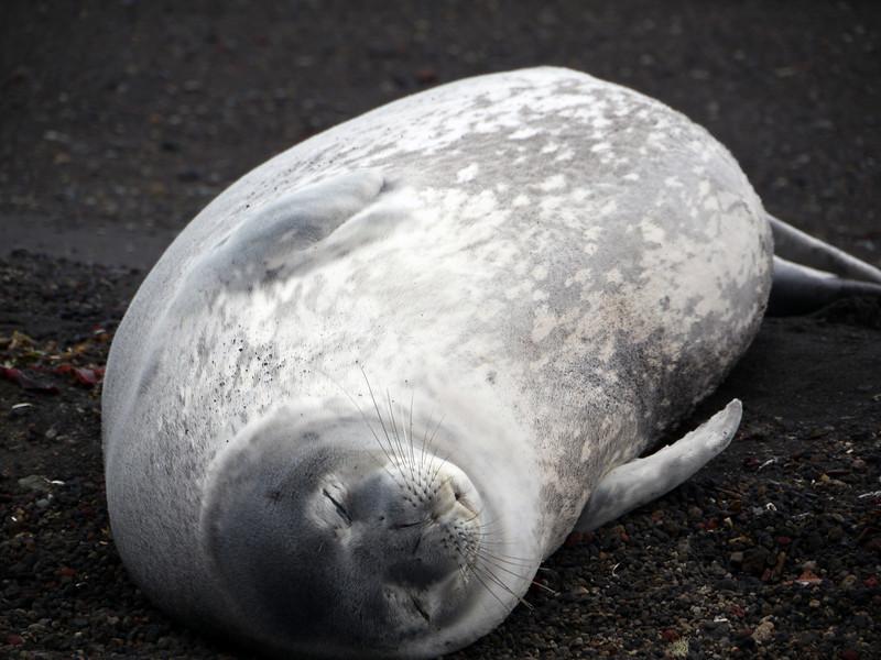 1622 - Deception Island - 2011-02-23 - P1070340