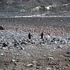 0276 - Half Moon Island - 2011-02-19 - P1050767