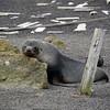 1639 - Deception Island - 2011-02-23 - P1070395
