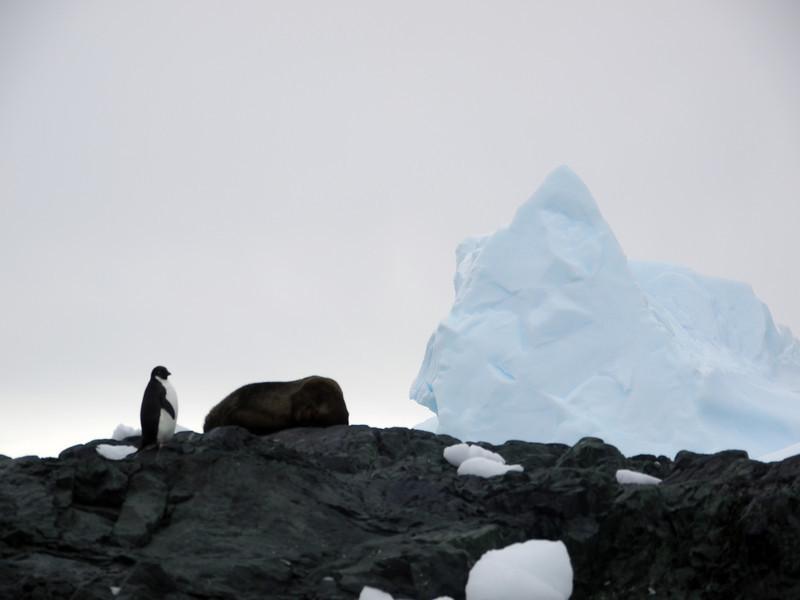 1332 - Detaille Island - 2011-02-21 - P1070061