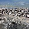 0090 - Ushuaia - 2011-02-17 - P1010522