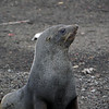 1632 - Deception Island - 2011-02-23 - P1070374