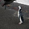 1616 - Deception Island - 2011-02-23 - P1070326