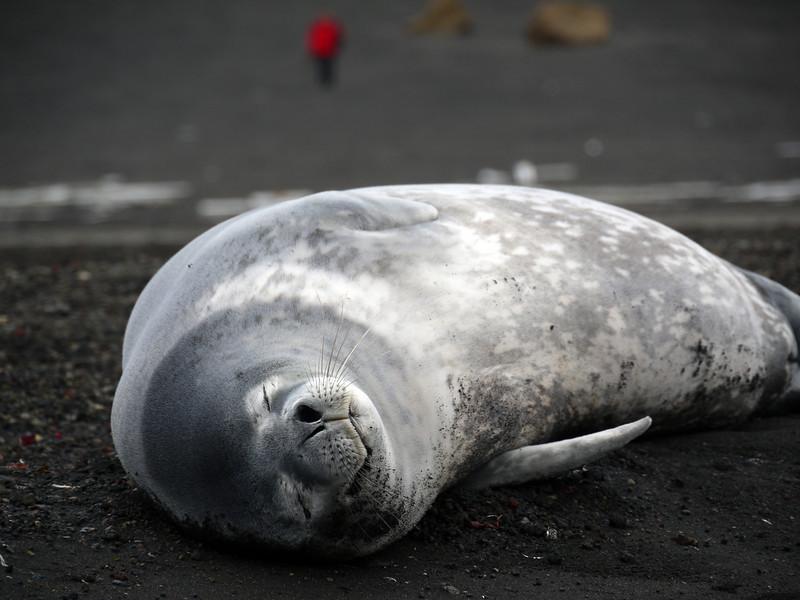 1668 - Deception Island - 2011-02-23 - P1070430