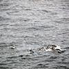 0320 - At Sea - 2011-02-19 - P1050820