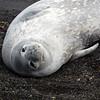 1623 - Deception Island - 2011-02-23 - P1070345
