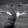1625 - Deception Island - 2011-02-23 - P1070351