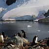 0635 - Cuverville Island - 2011-02-20 - P1060166