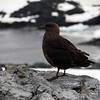 1265 - Detaille Island - 2011-02-21 - P1060929