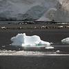 0581 - Neko Harbour - 2011-02-20 - P1060110