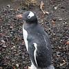 1719 - Deception Island - 2011-02-23 - P1070501