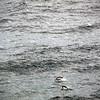 0324 - At Sea - 2011-02-19 - P1050826