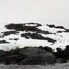 1297 - Detaille Island - 2011-02-21 - P1060986