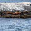 0071 - Ushuaia - 2011-02-17 - P1010535