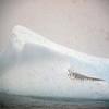0354 - At Sea - 2011-02-19 - P1050853