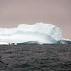 1464 - Penola Strait-Booth Island - 2011-02-22 - P1010798