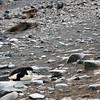 0278 - Half Moon Island - 2011-02-19 - P1050769