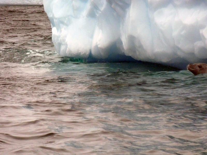 1461 - Penola Strait-Booth Island - 2011-02-22 - P1010792