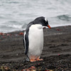 1677 - Deception Island - 2011-02-23 - P1070455
