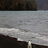1613 - Deception Island - 2011-02-23 - P1070312