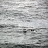 0317 - At Sea - 2011-02-19 - P1050815