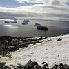 0686 - Cuverville Island - 2011-02-20 - P1060206