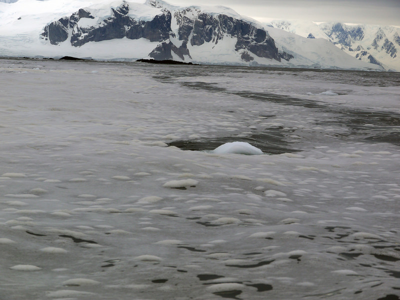1289 - Detaille Island - 2011-02-21 - P1060973
