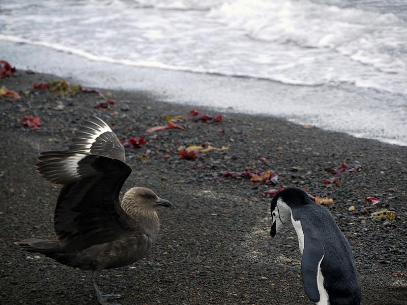 1619 - Deception Island - 2011-02-23 - P1070329