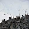 0248 - Half Moon Island - 2011-02-19 - P1050730