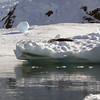 0437 - Neko Harbour - 2011-02-20 - P1050962