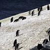 0260 - Half Moon Island - 2011-02-19 - P1050746
