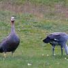 0040 - Ushuaia - 2011-02-17 - P1010462