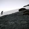 1292 - Detaille Island - 2011-02-21 - P1060981