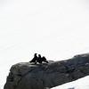 0559 - Neko Harbour - 2011-02-20 - P1060053