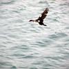 1561 - Deception Island - 2011-02-23 - P1070245