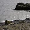 0158 - Half Moon Island - 2011-02-19 - P1050655