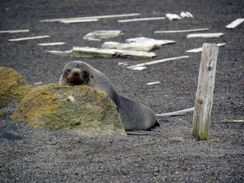 1637 - Deception Island - 2011-02-23 - P1070392