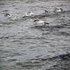 0322 - At Sea - 2011-02-19 - P1050824