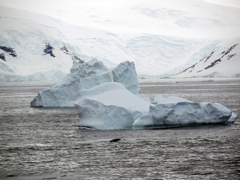 1257 - Detaille Island - 2011-02-21 - P1060941