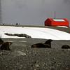 0171 - Half Moon Island - 2011-02-19 - P1050675