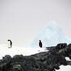 1311 - Detaille Island - 2011-02-21 - P1070010