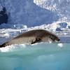 0388 - Neko Harbour - 2011-02-20 - P1050914