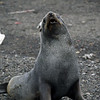 1633 - Deception Island - 2011-02-23 - P1070377