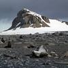 0182 - Half Moon Island - 2011-02-19 - P1010605