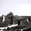1262 - Detaille Island - 2011-02-21 - P1060938