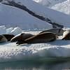 0395 - Neko Harbour - 2011-02-20 - P1050920