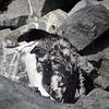 0266 - Half Moon Island - 2011-02-19 - P1050752