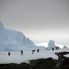 1316 - Detaille Island - 2011-02-21 - P1070026